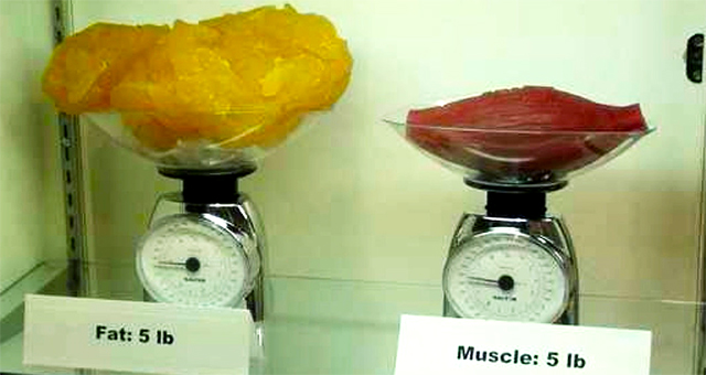 muscletofat