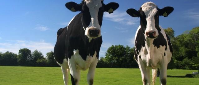 Veien til god helse – Helsefordelene med å spise kjøtt