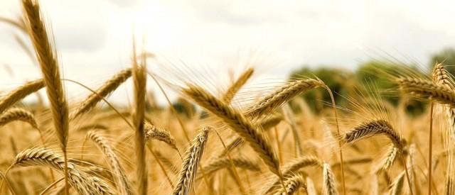 Veien til god helse – Gjør kroppen en tjeneste og styr unna korn