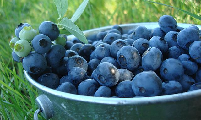 spiser nesten bare frukt anorektisk