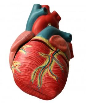 prøve til hjertesvikt