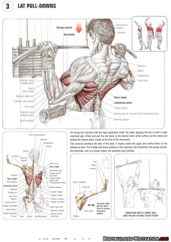 Anatomisk visning av muskelaktivering under nedtrekk