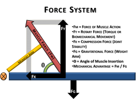 Force-System2