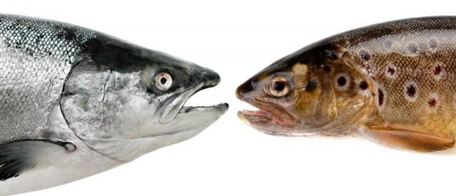 Dette trenger du å vite om omega-3