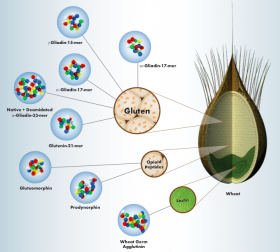 wheat-proteome